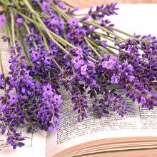 LavendelBuch_S