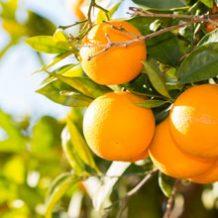 Orangen_S